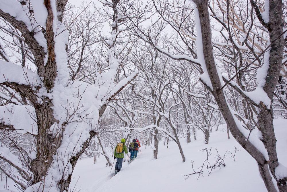 A tour through the perfect birch glades above Shakotan Hut.