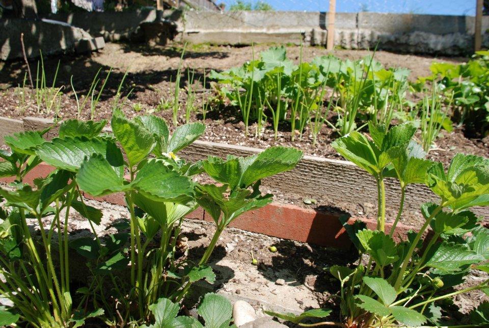 plant a garden 2