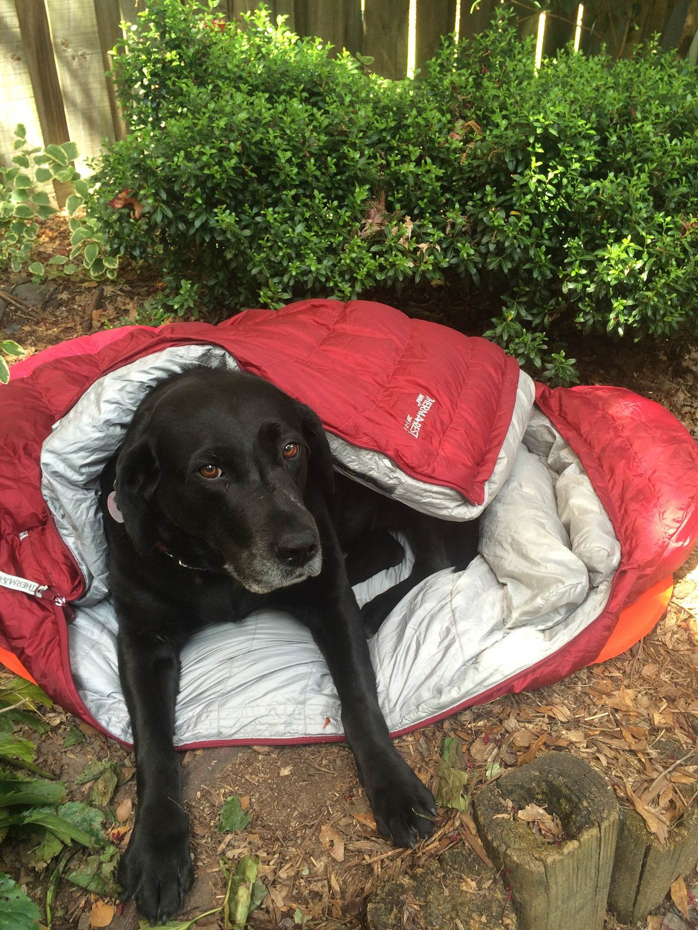 Considering a long-distance hike with your dog? - Therm-a-Rest Blog