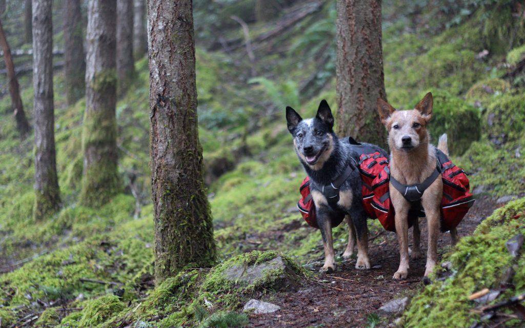 essentials for backpacking with dogs