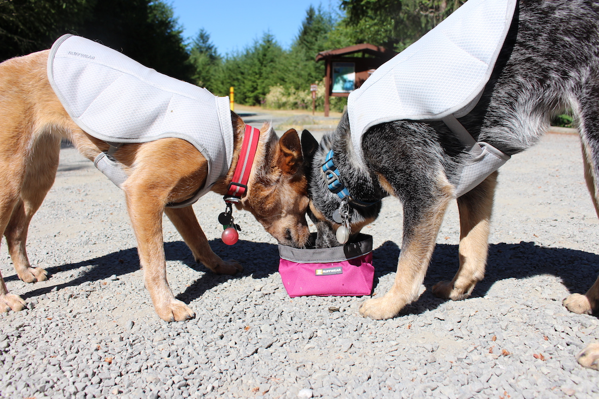 hydrating dogs while backpacking