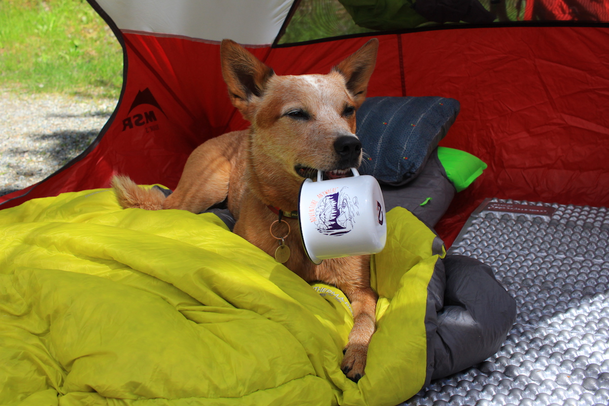 By the time you reach your spot to set up c& for the night they are exhausted ready to sit by the fire and get a rested sleep in the tent. & 10 Dog Backpacking Essentials - Therm-a-Rest Blog
