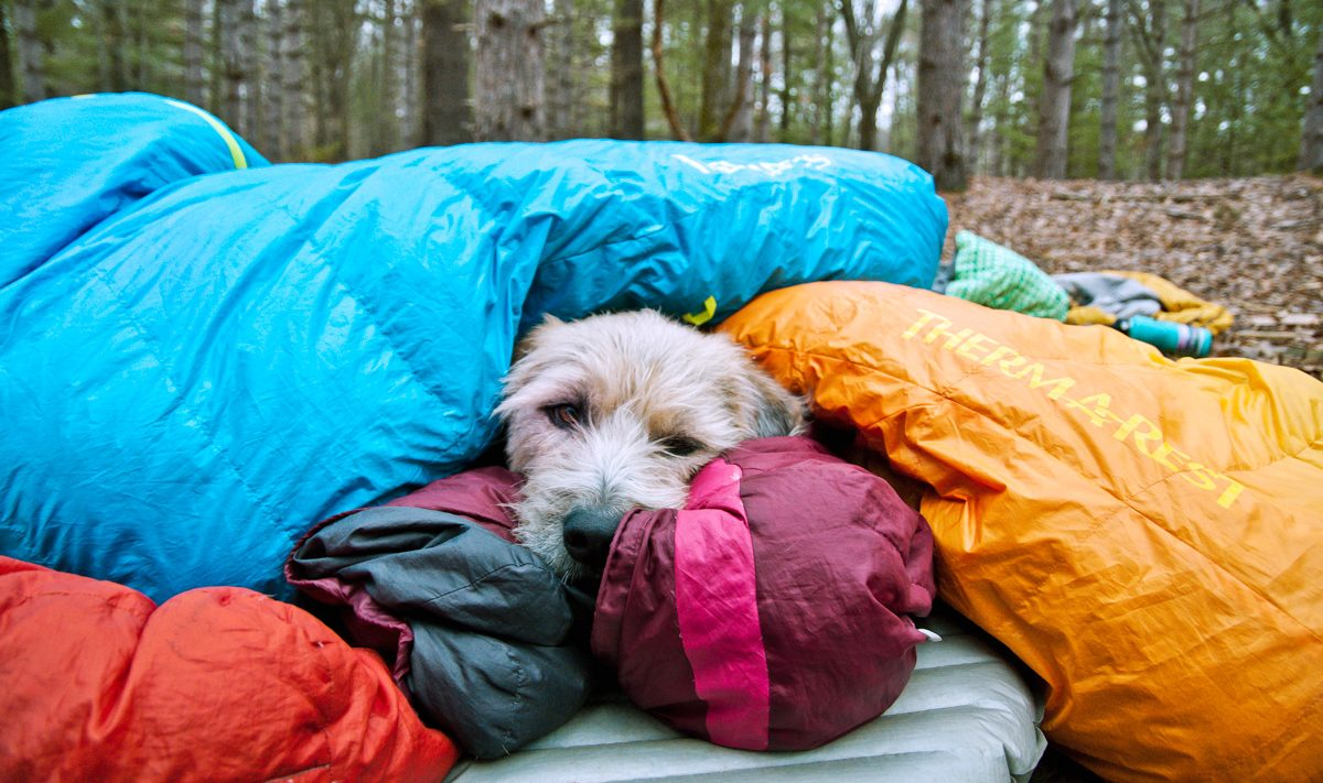 dog in sleeping bags on sleeping pad while camping