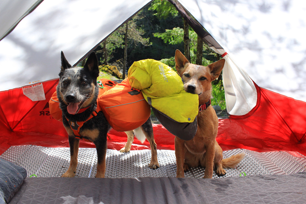 dogs sitting in tent