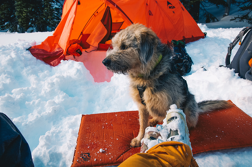 eco-friendly snow camping with dog
