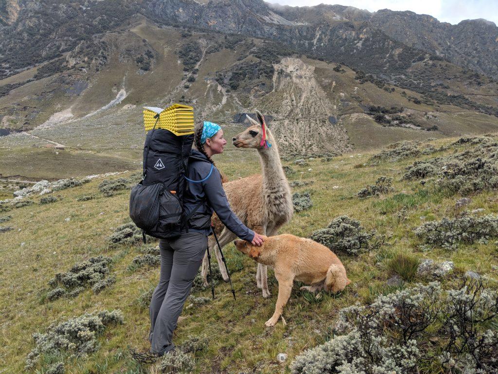 hiking with dog and alpaca