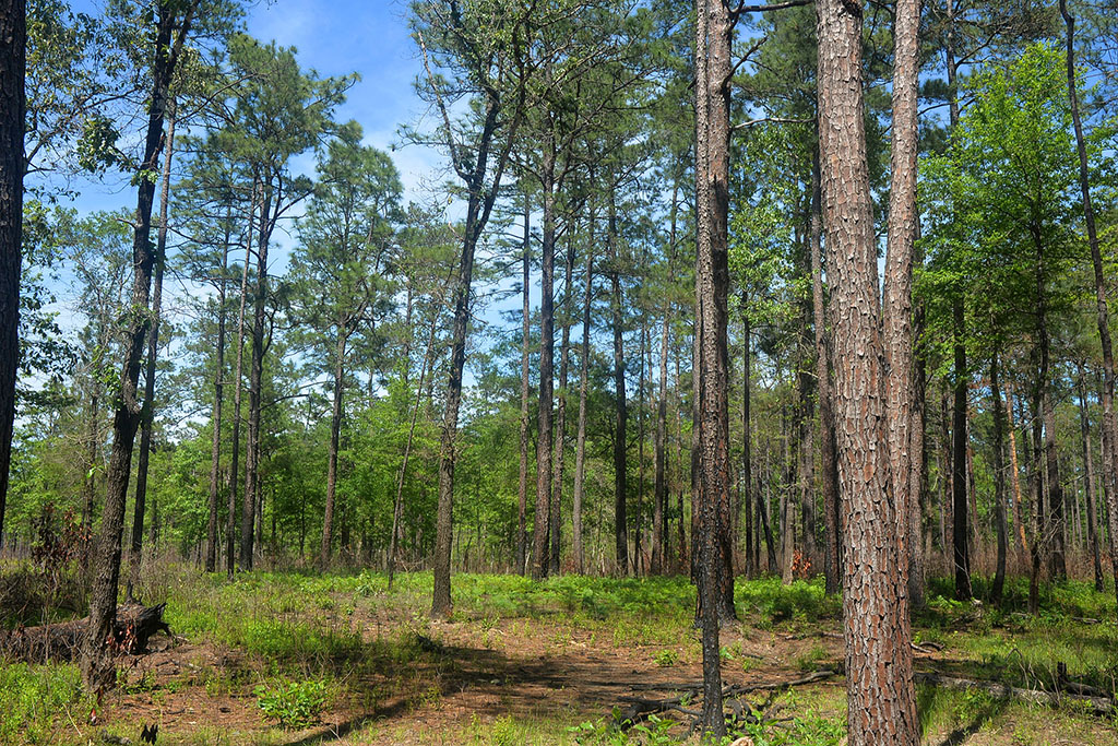 Big_Thicket_National_Preserve