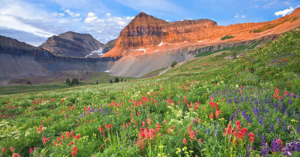 Timpanogos-Utah wildflowers