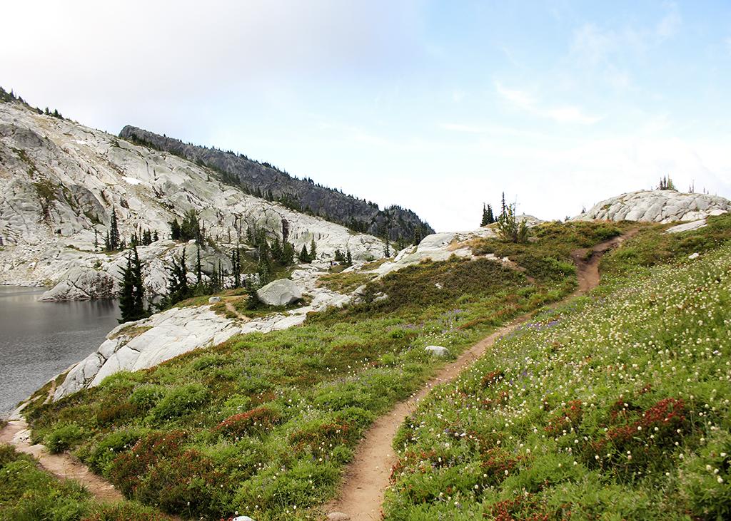 Tuck-Robin wildflower trail