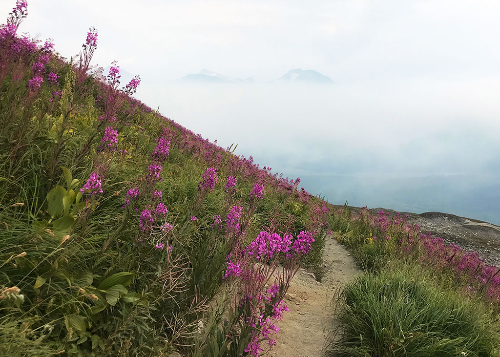 Harding-Alaska wildflower trail
