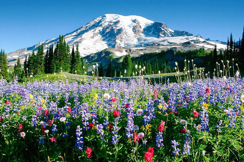 Mount Rainier wildflower trail