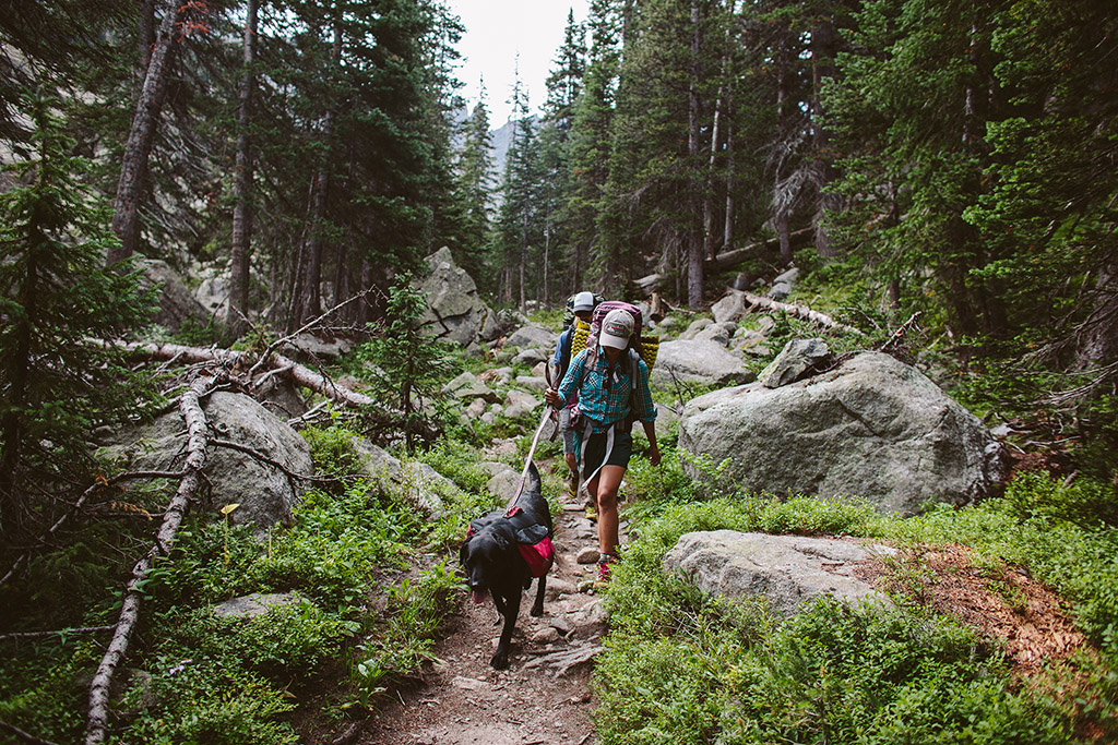 trail hiking with dog