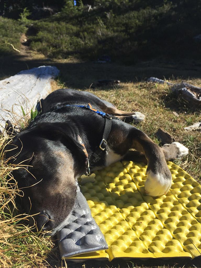 dog lying on sleeping pad